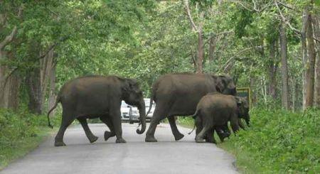 Sulthan Bathery Wayanad Wildlife Sanctuary