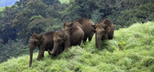 Aralam Wildlife