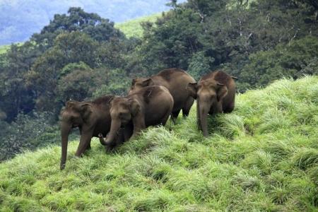 Fauna in Aralam Wildlife Sanctuary