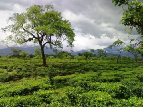 Beautiful Kanchendzonga National Park