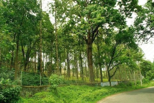 The beautiful Marayoor Sandalwood Forest