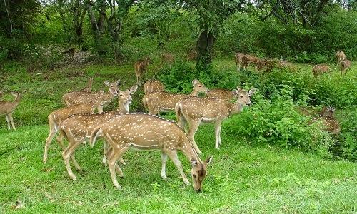 Talakaveri Wildlife Sanctuary