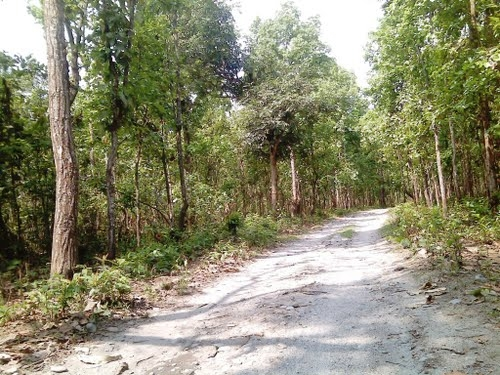 Baikunthapur Forests