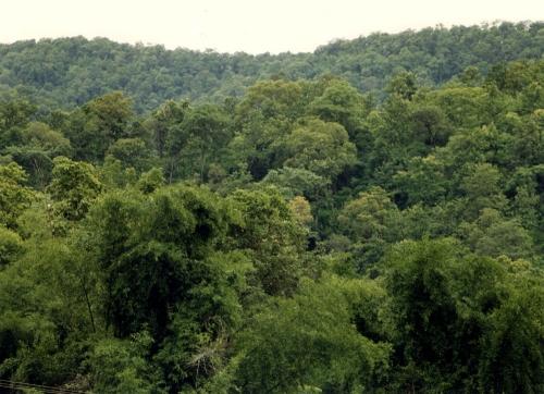 Bhavnagar, Amreli Forest