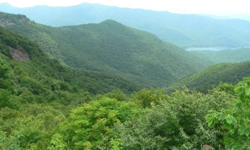 Jakanari Reserve Forest