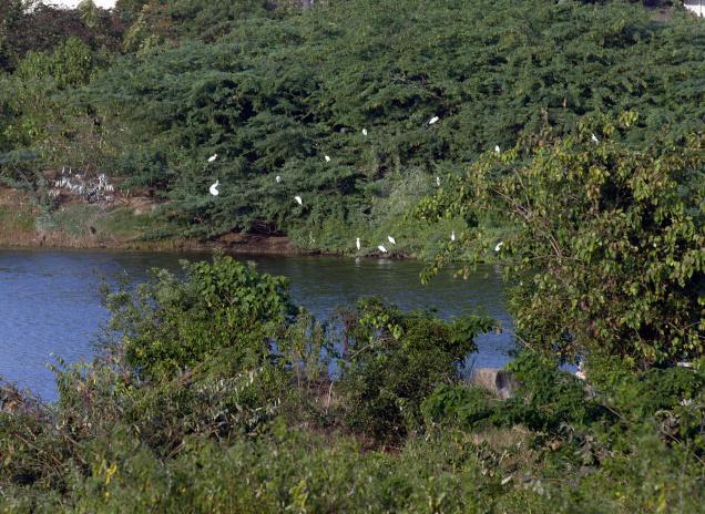 Nanmangalam Reserve Forest
