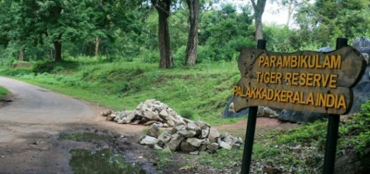 Parambikulam Wildlife Sanctuary in Kerala, India