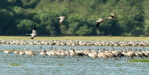 Bird Life Strive Near The Water Side