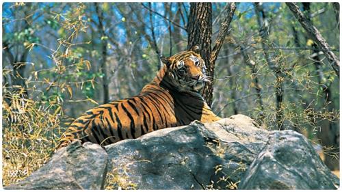 Mundanthurai Wildlife Sanctuary