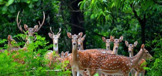 Ramnabagan Wildlife Sanctuary