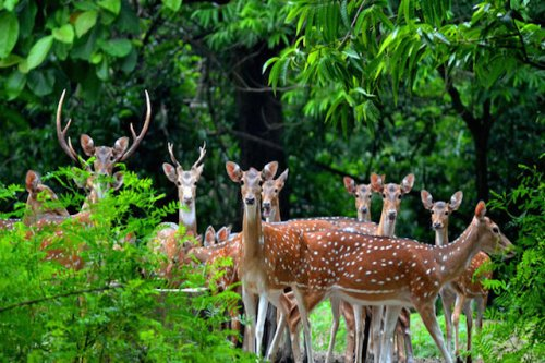 Ramnabagan Wildlife Sanctuary