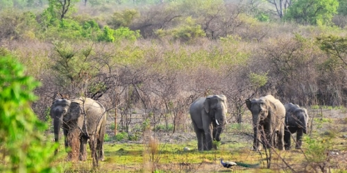Wildlife Sanctuaries in Haryana