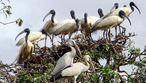Wildlife Sanctuary in Odisha