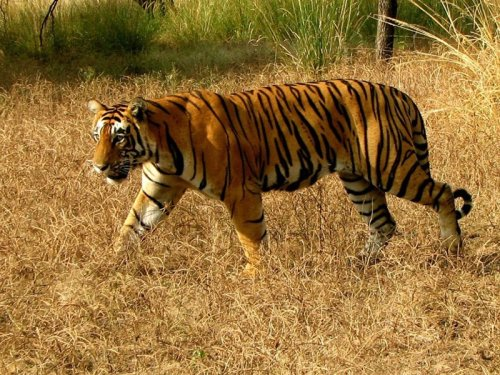 Bir Bhadson Wildlife Sanctuary