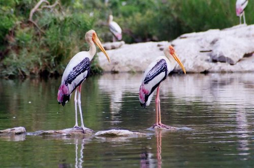 Chitrangudi Bird Sanctuary