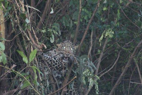 Kathlaur Kushlian Wildlife Sanctuary