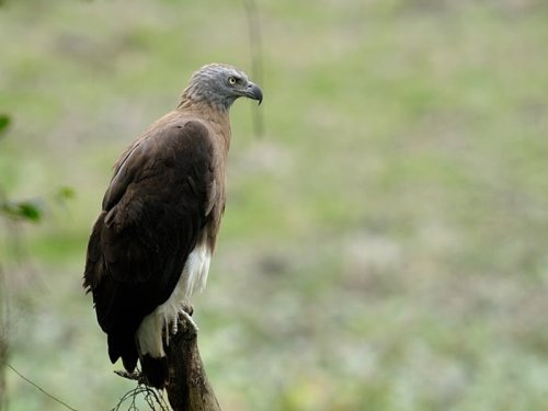 Pulie Badze wildlife sanctuary