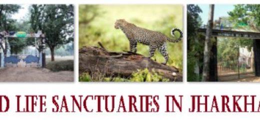 Wild Life Sanctuaries in Jharkhand