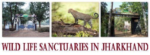 Wild Life Sanctuaries in Jharkhand