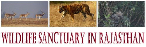 Wildlife Sanctuary in Rajasthan
