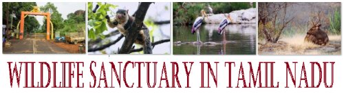 Wildlife Sanctuary in Tamil Nadu