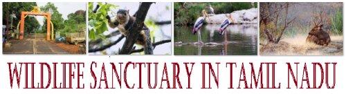 Wildlife Sanctuary in Tamil Nadu