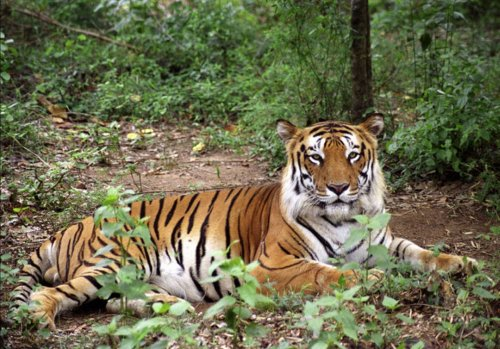 Satkosia Tiger Reserve
