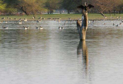 Thol Lake Bird Sanctuary