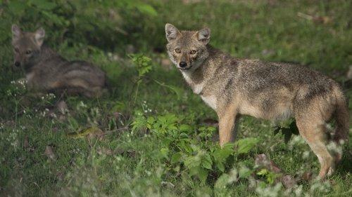 Bir Moti Bagh Wildlife Sanctuary