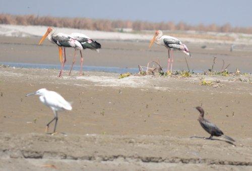 Hastinapur Wildlife Sanctuary