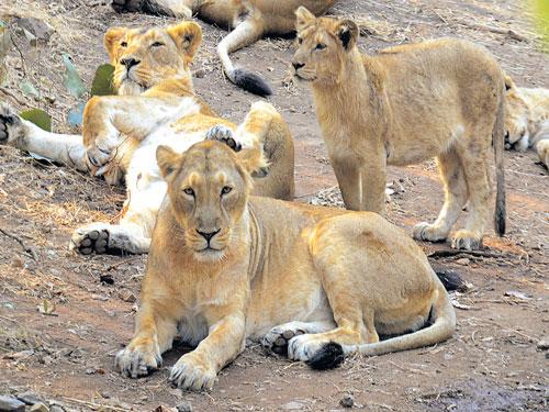 Kuno Wildlife Sanctuary