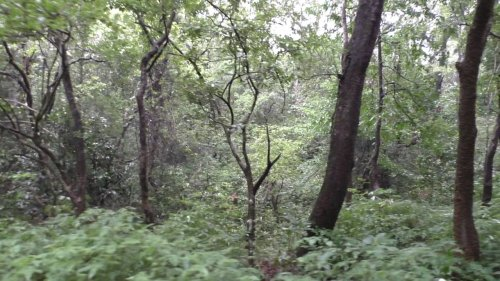 Mahavirswami Wildlife sanctuary
