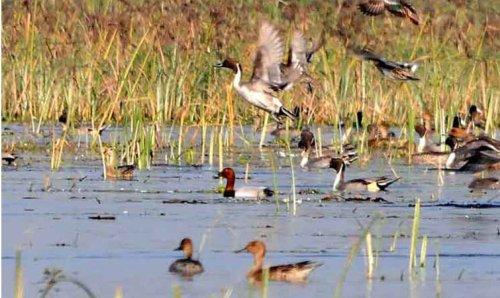 Martyr Chandra Shekhar Azad Bird Sanctuary