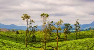 Top hill stations in Tamil Nadu